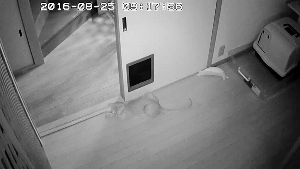 1階にいるアビのすけ。