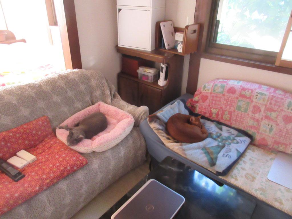 ここで寝ている猫たち。