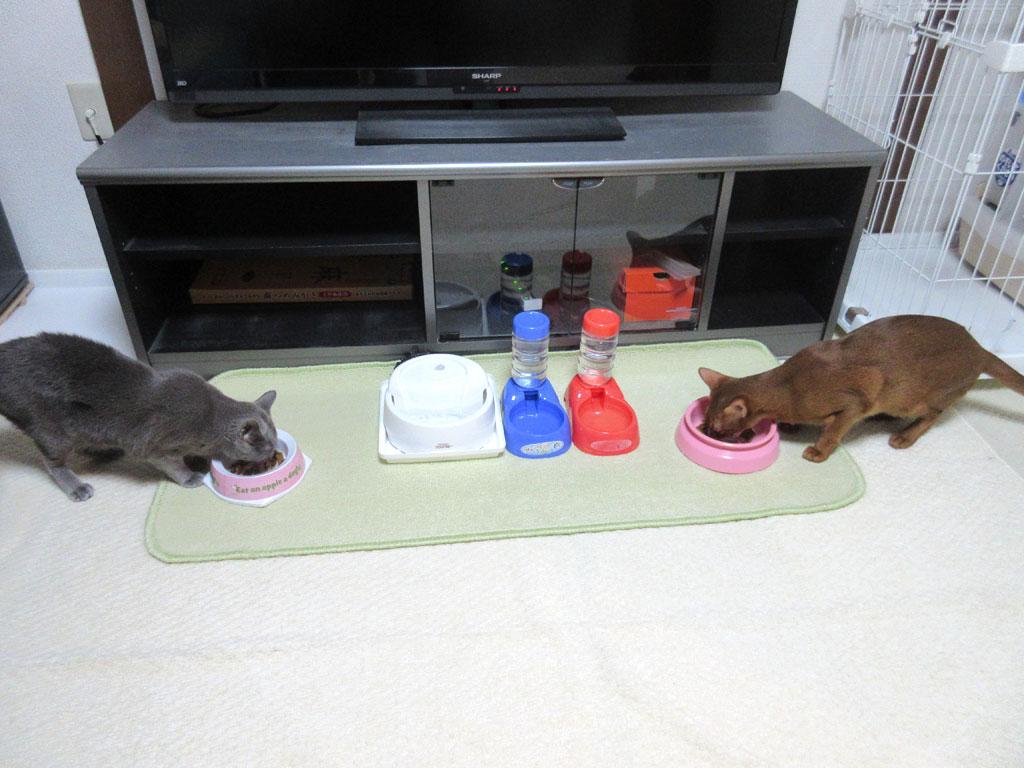 一所懸命、ご飯を食べる猫たち。