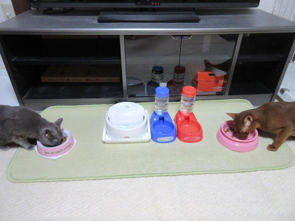 美味しそうに食べる猫たち。