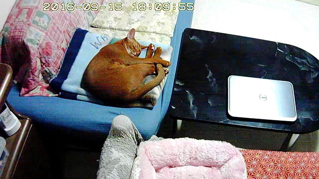 昼寝をしていたアビのすけ。