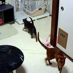 オロオロしている猫たち。