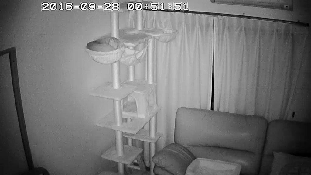 にゃんモックで寝てるアビのすけ。