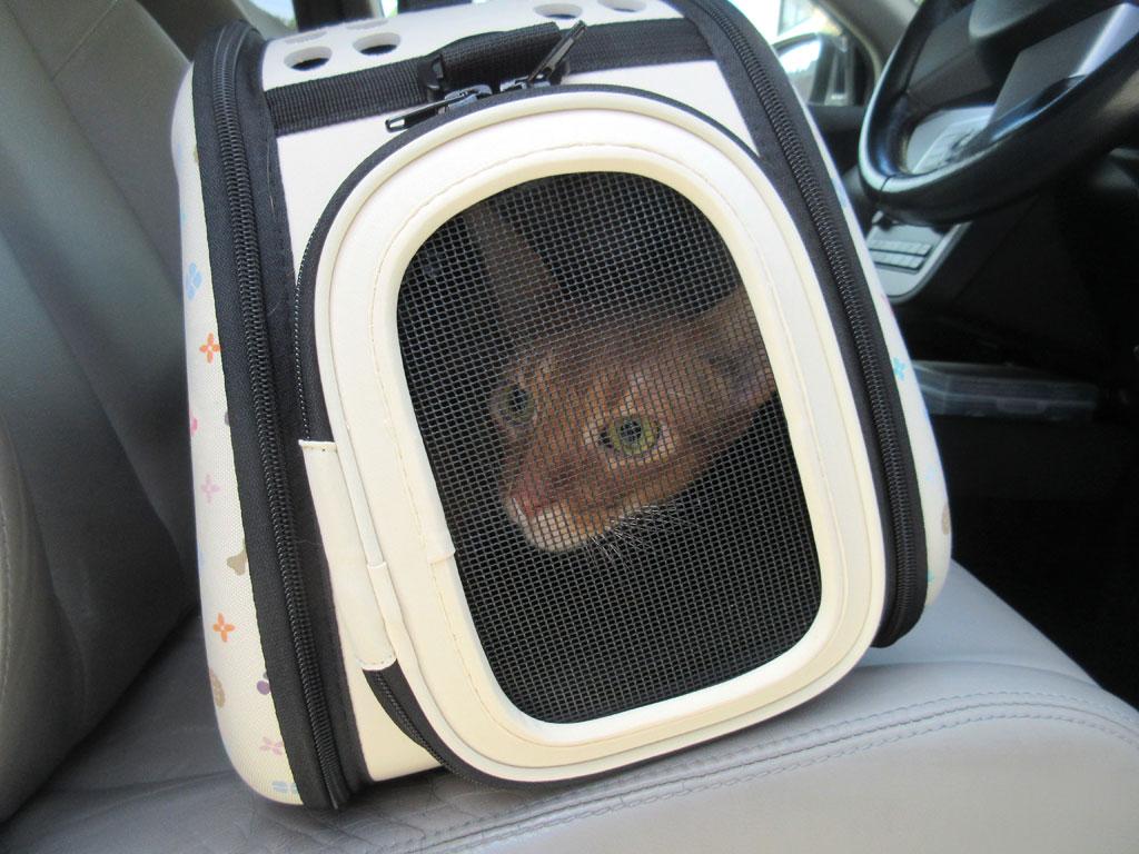 動物病院の駐車場に到着。