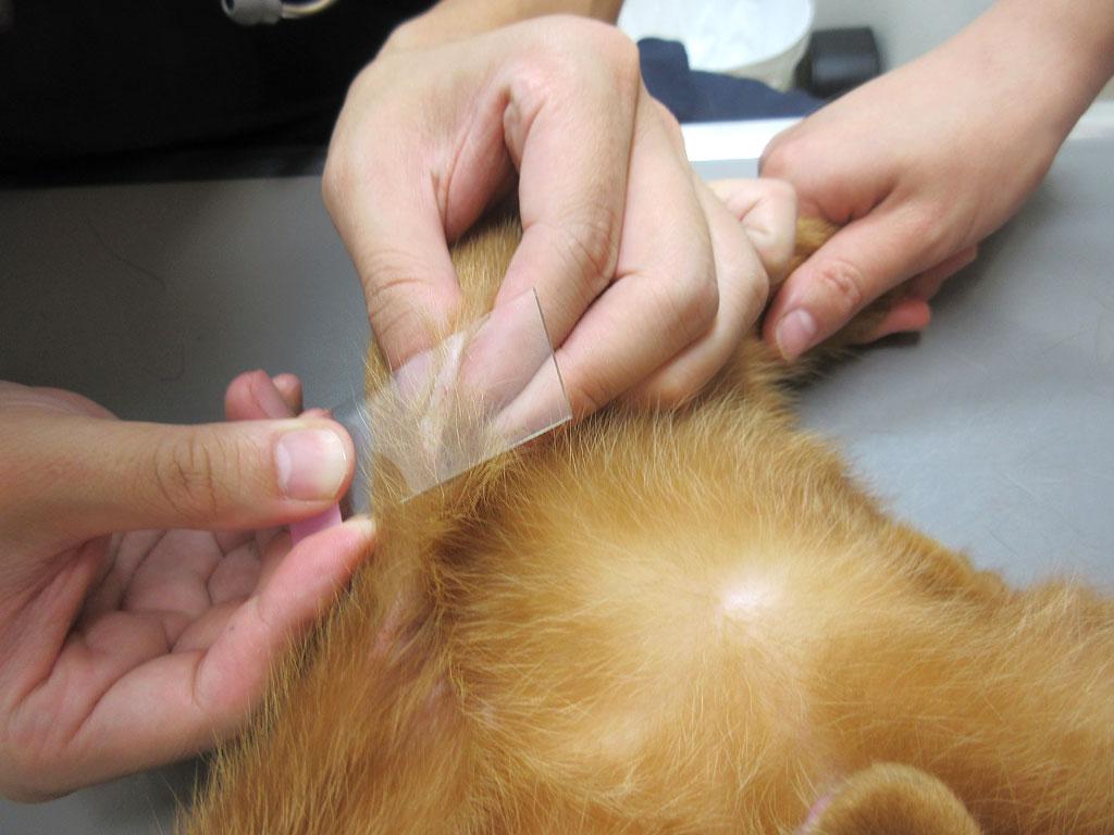 皮膚の検査②
