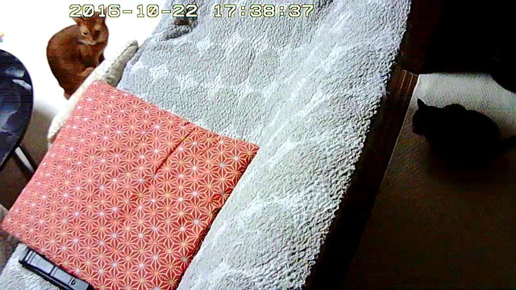 ソファー越しのロシ子とアビのすけ。