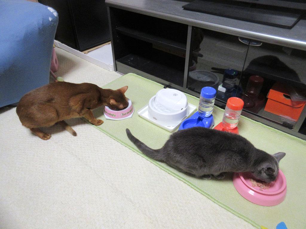 てれこで食べる猫たち。