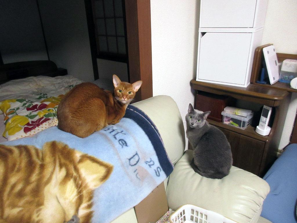 美男・美女の我が家の猫たち。