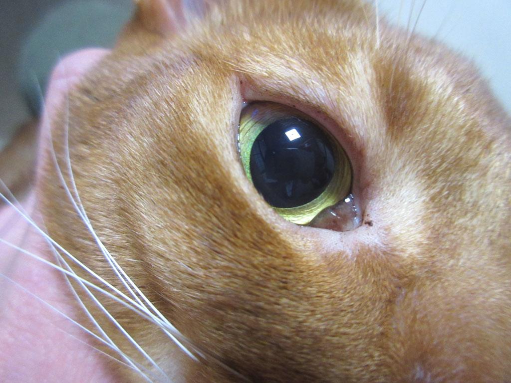 きれいな瞳のあびのすけ。