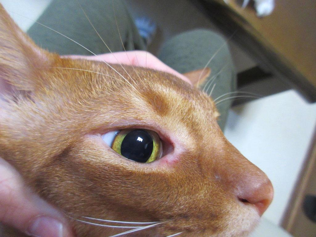 アビのすけの目が綺麗に。