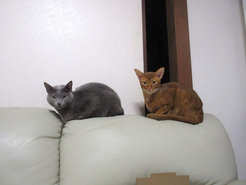 シンクロ猫たち。