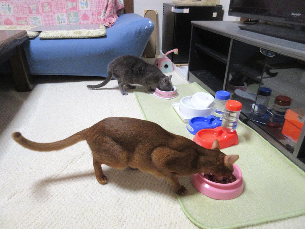 立ち食いの猫たち。