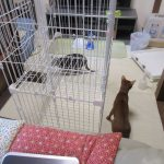 大掃除の猫たち。