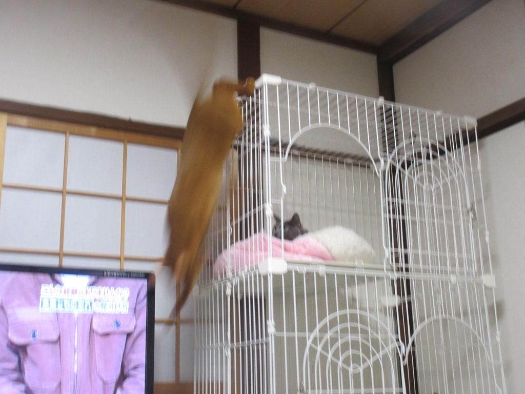 飛び降りたアビのすけ。