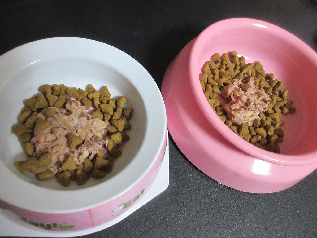 猫たちの記念日ご飯。
