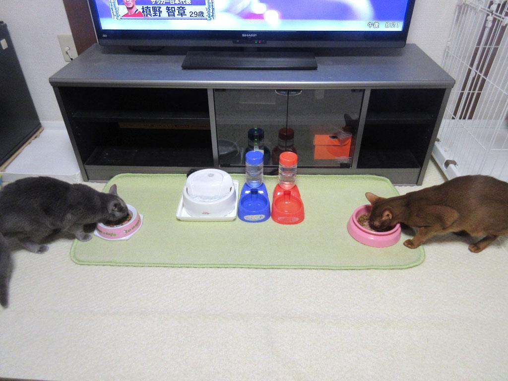 元気一杯の猫たち。