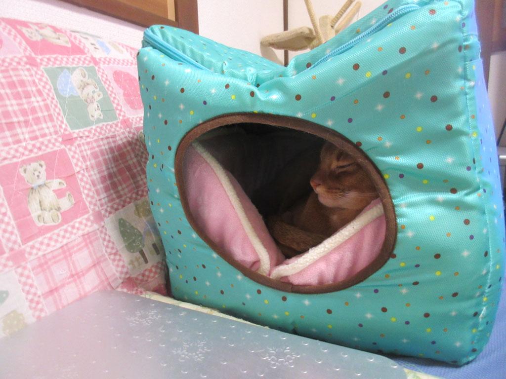 暖かい場所で寝るアビのすけ。