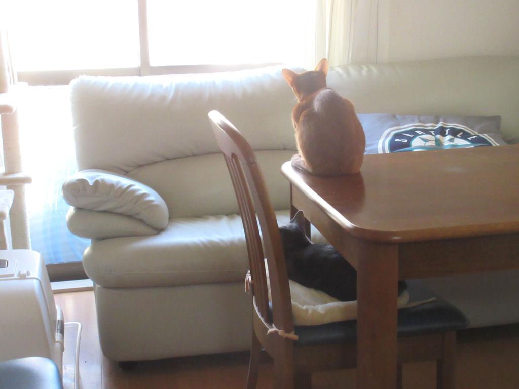 仲良しな我が家の猫たち。