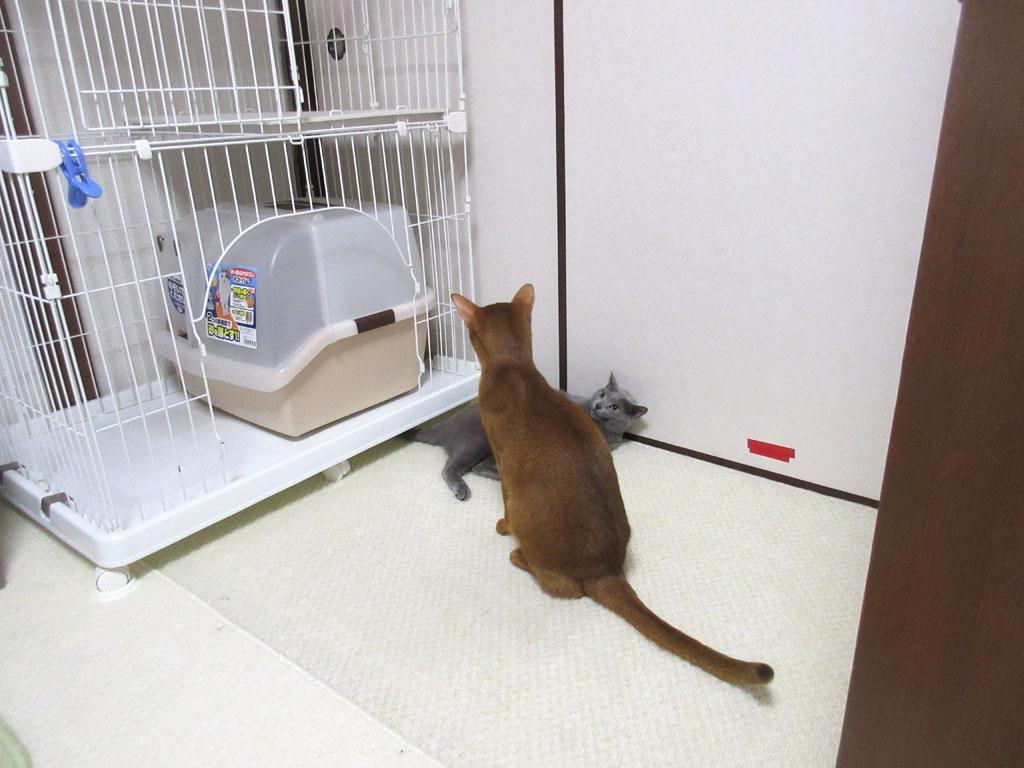 仲良しな猫たち。
