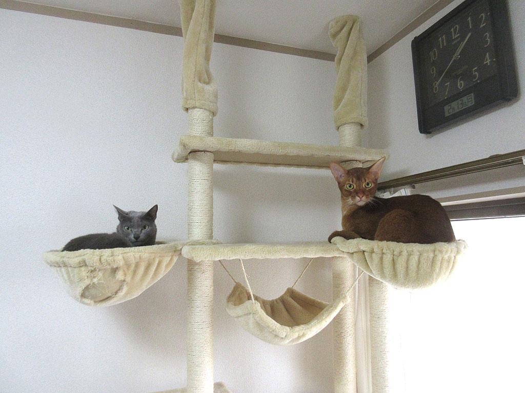 仲良さそうな我が家の猫たち。