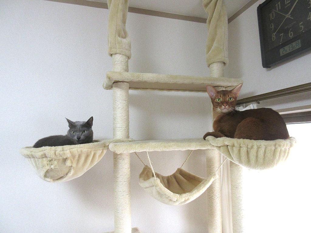 理想的な我が家の猫たち。
