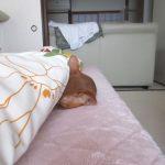 一緒に寝てくれたアビのすけ。