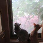 蝉に釘付けの猫たち。