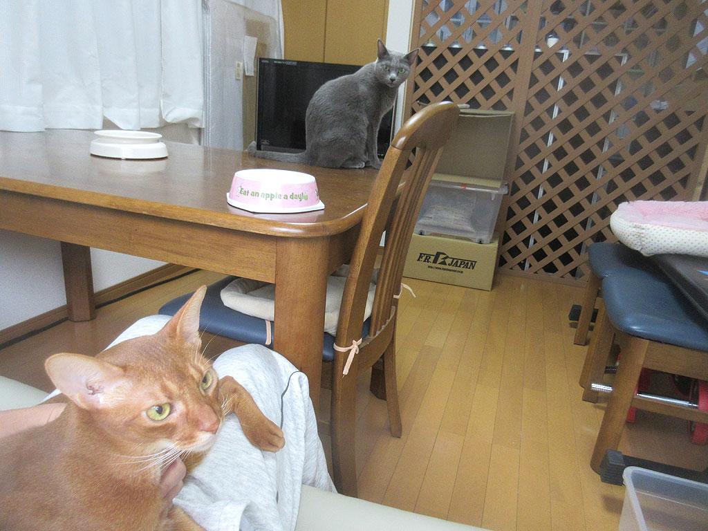 昼ご飯後の猫たち。