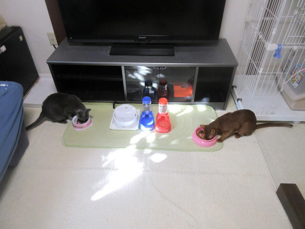 朝ご飯の風景。