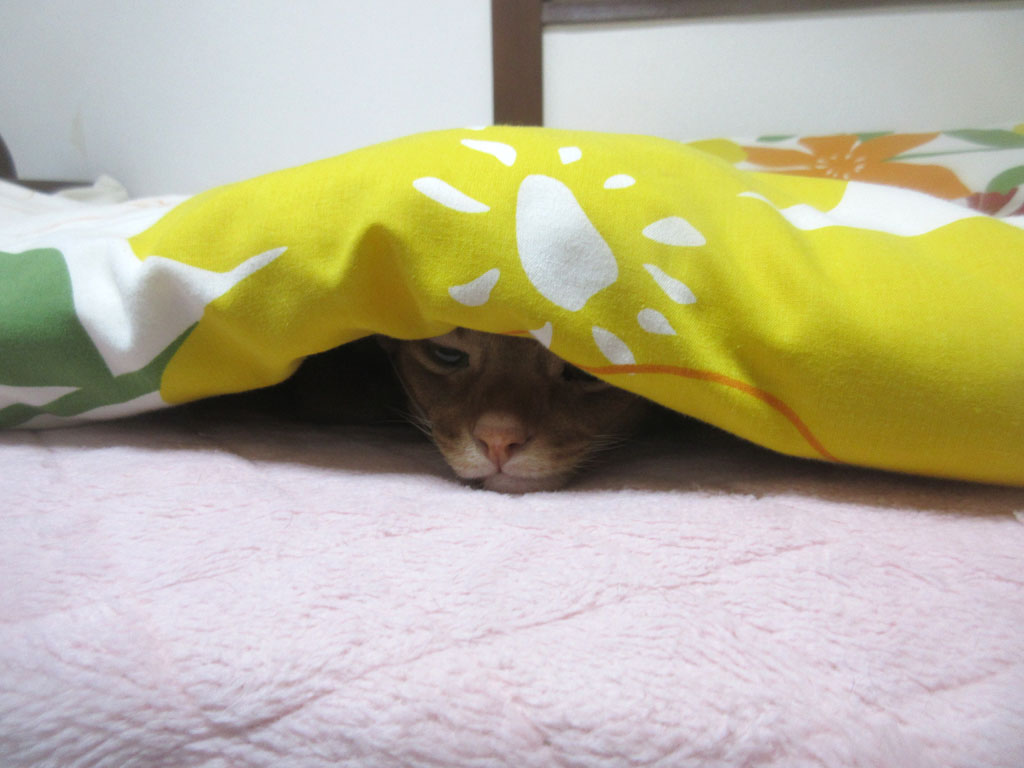 眠たそうなアビのすけ。