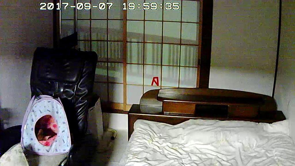 寝てるアビのすけ。
