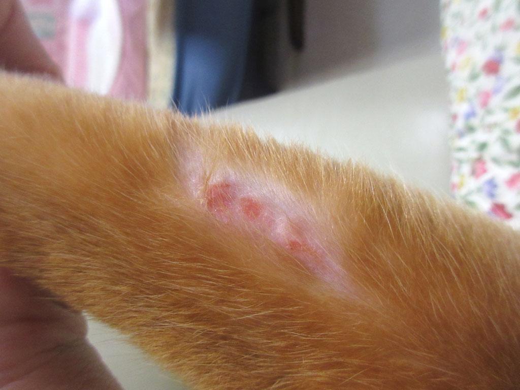 アビのすけの左腕の皮膚炎。