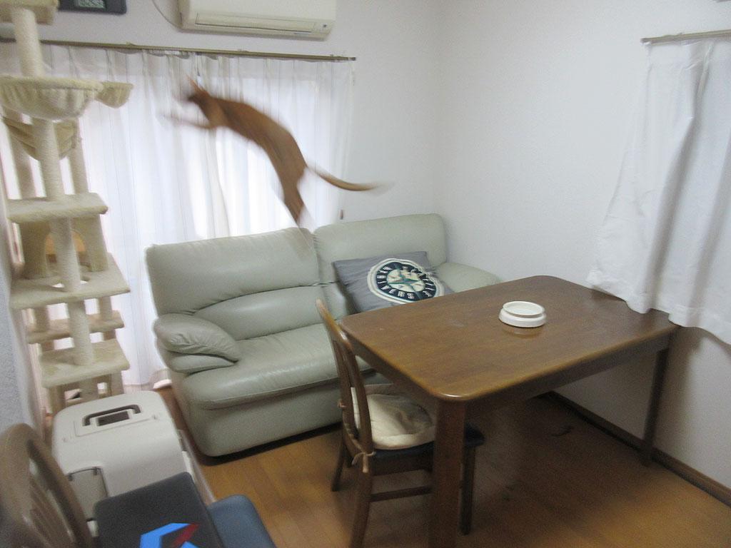 軽快にジャンプするアビのすけ。