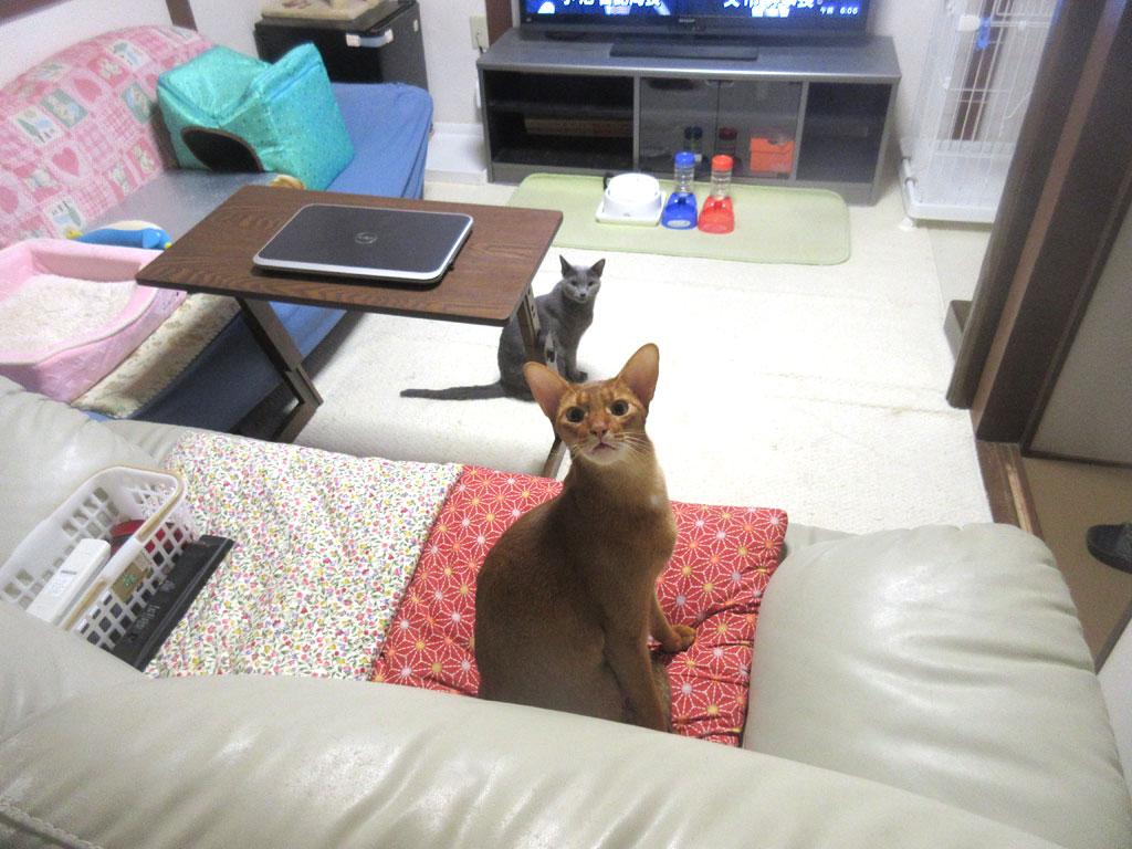 今朝の我が家の猫たち。