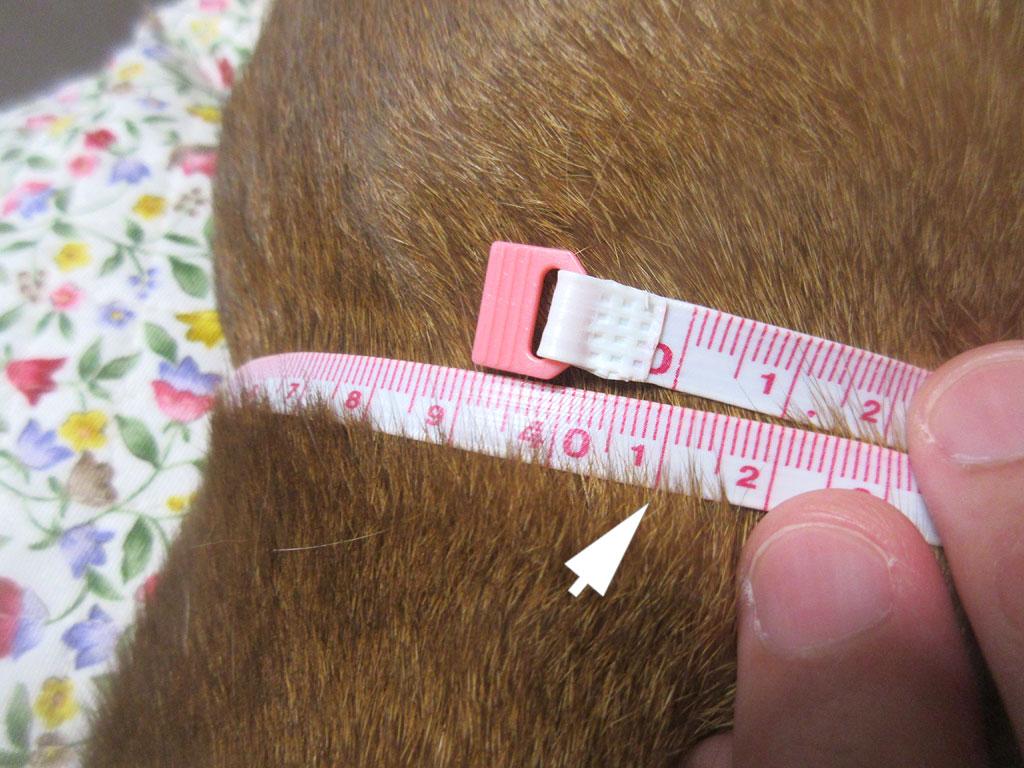 第9肋骨周りは41cm。