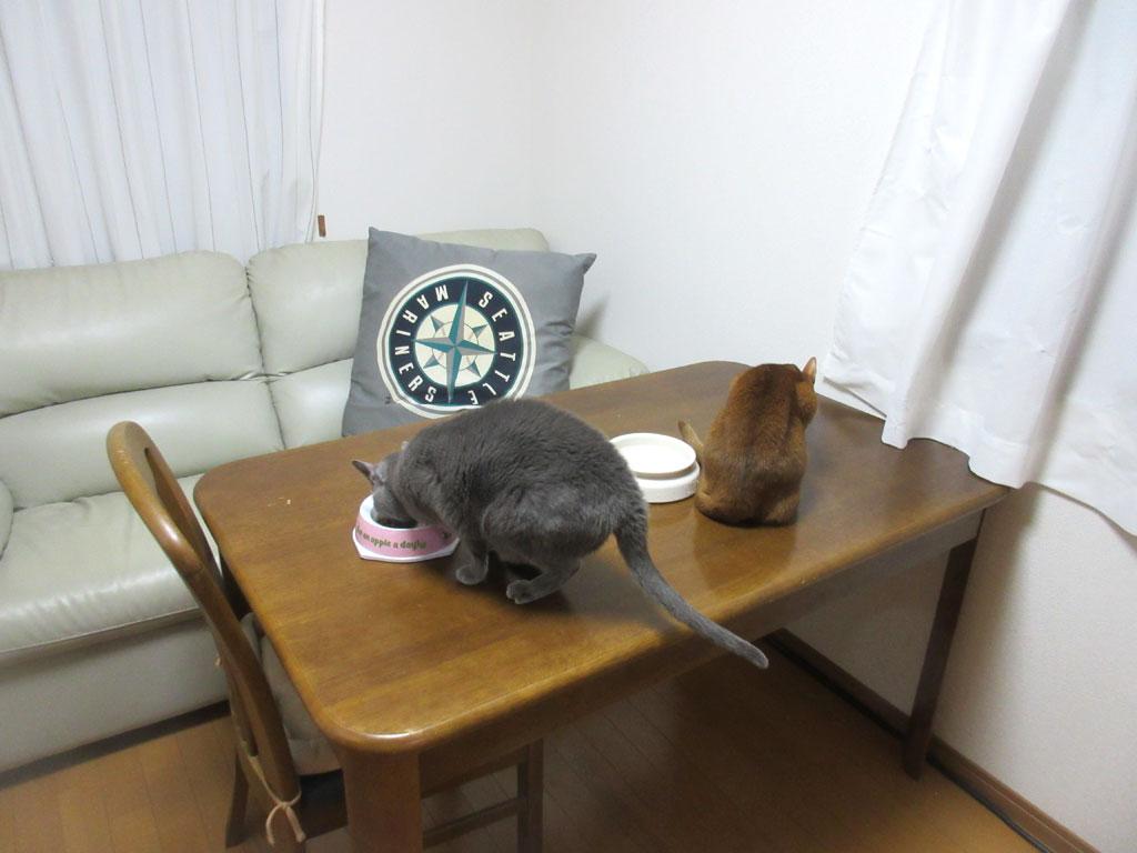 今朝の猫たちの朝ご飯。