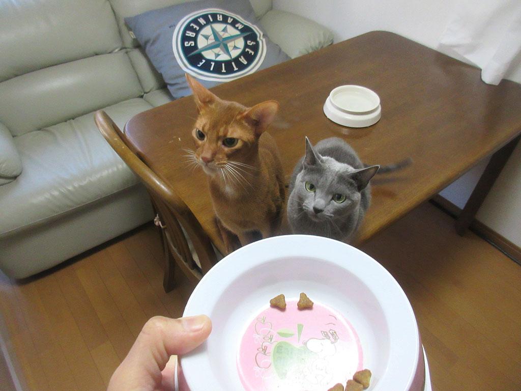 2回目ご飯の猫たち。