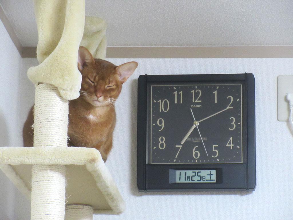 転寝をするアビのすけ。