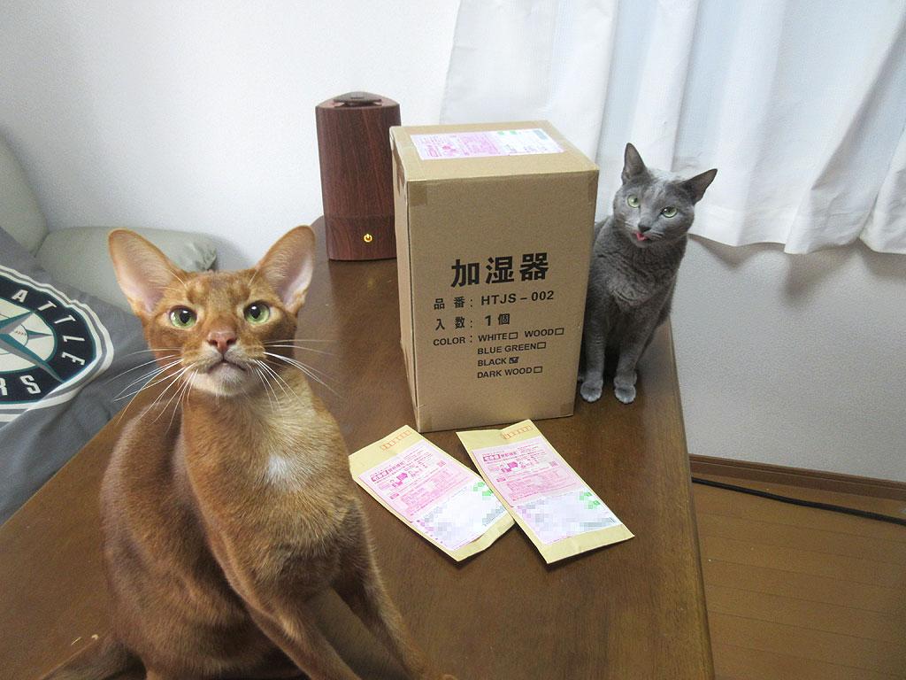 新たしい加湿器と猫たち。