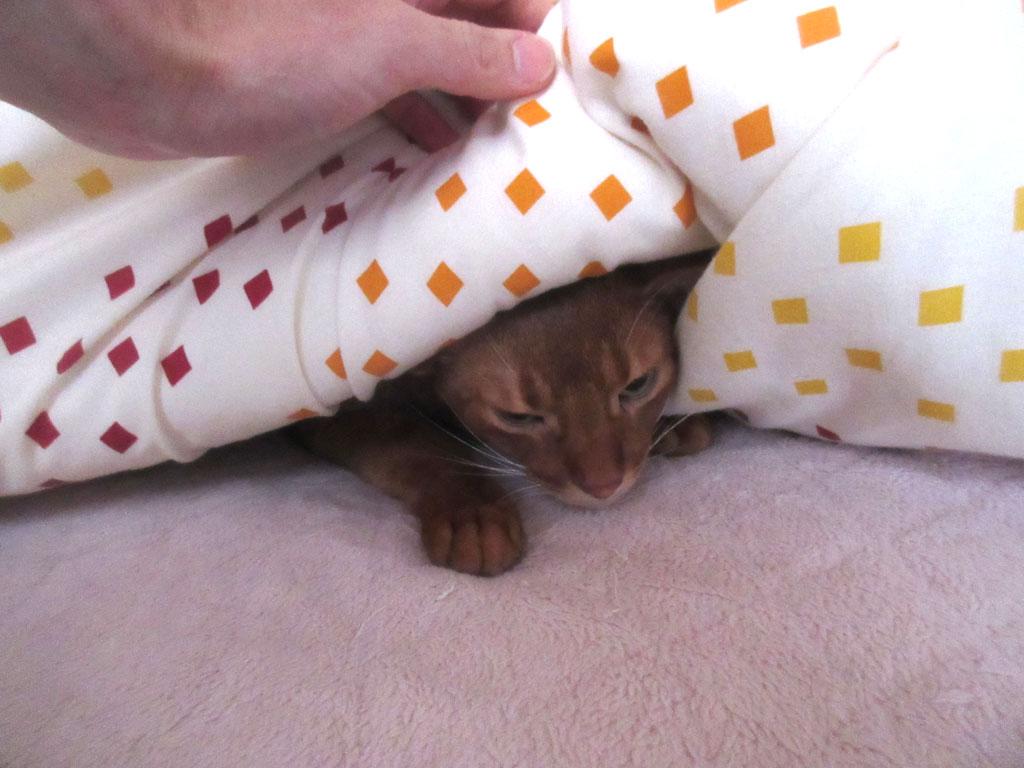 ずっと寝ていたい飼主です。