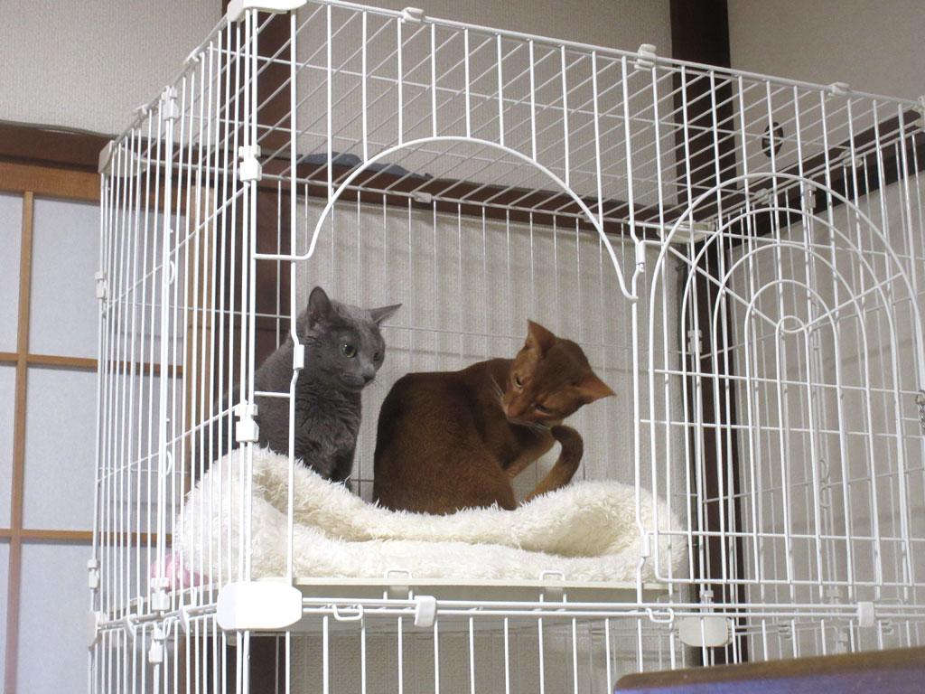 人の迷惑を考えない猫。