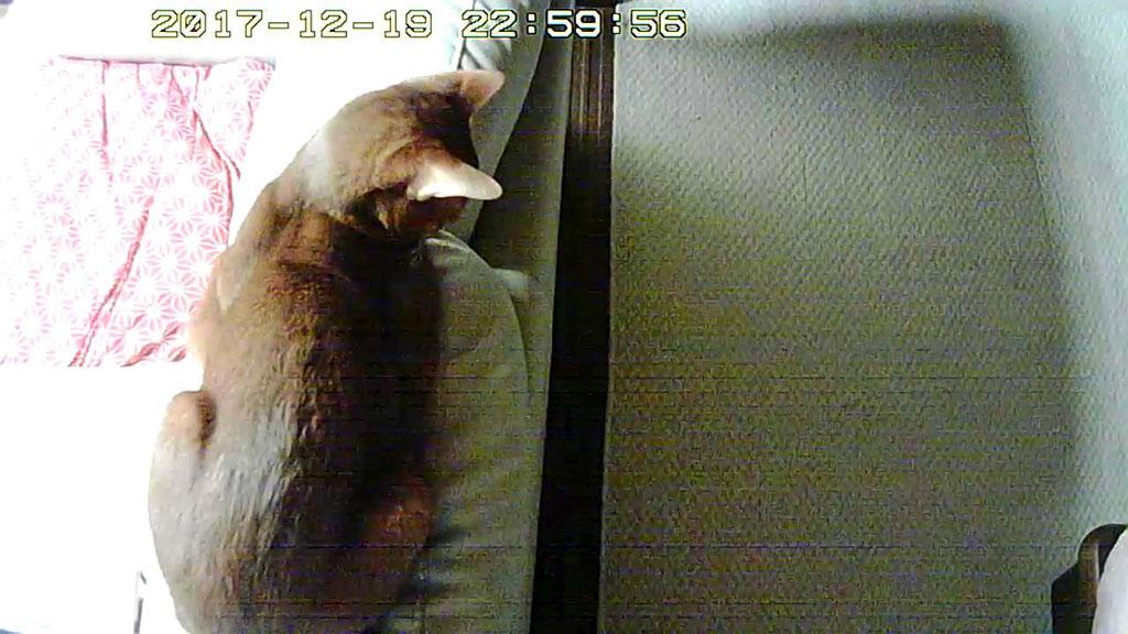 暖房に当たるアビのすけ。