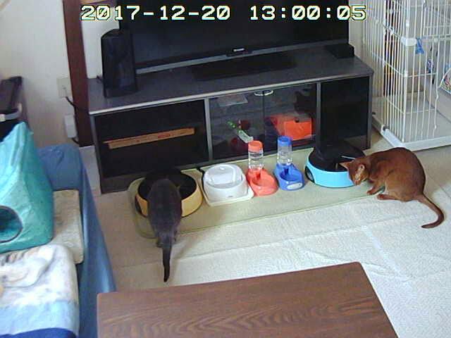 お留守番3日目の猫たち。