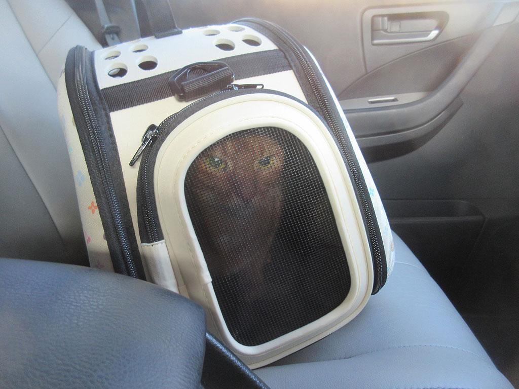 車の中のアビのすけ。