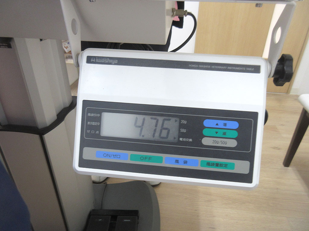アビのすけの体重は4.76kg。