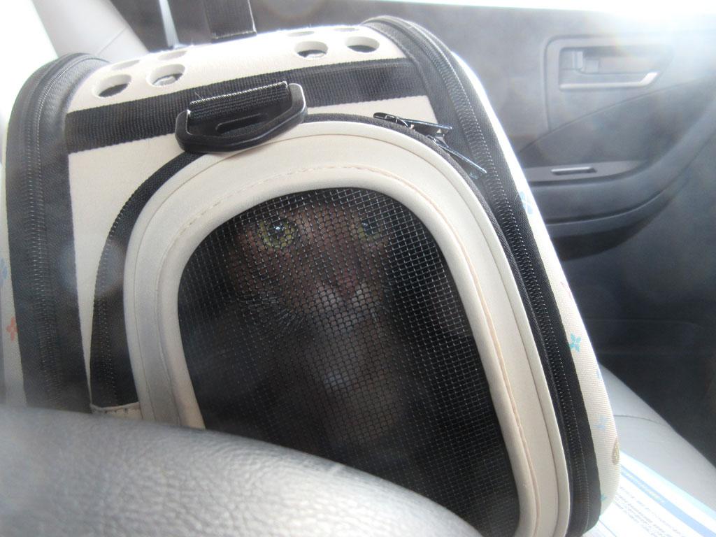 帰りの車中のアビのすけ。