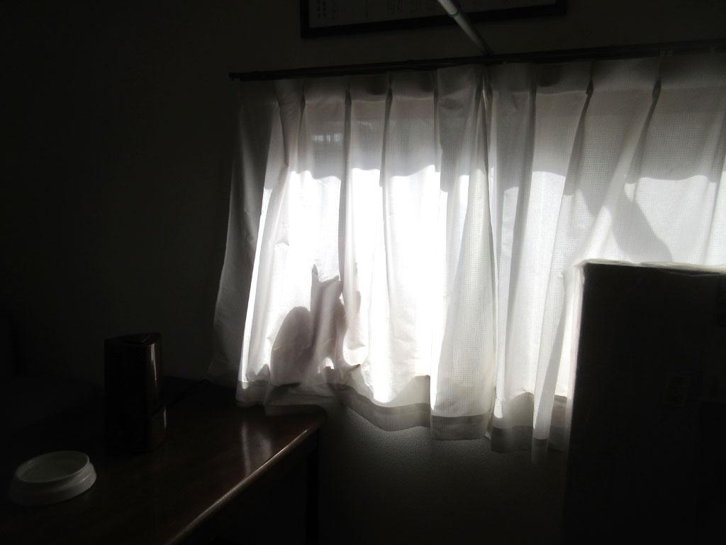 好奇心旺盛なアビのすけ。
