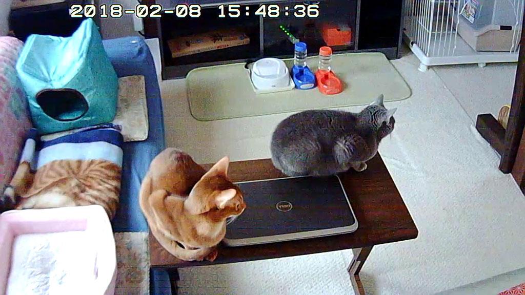 猫たちを2階に隔離。