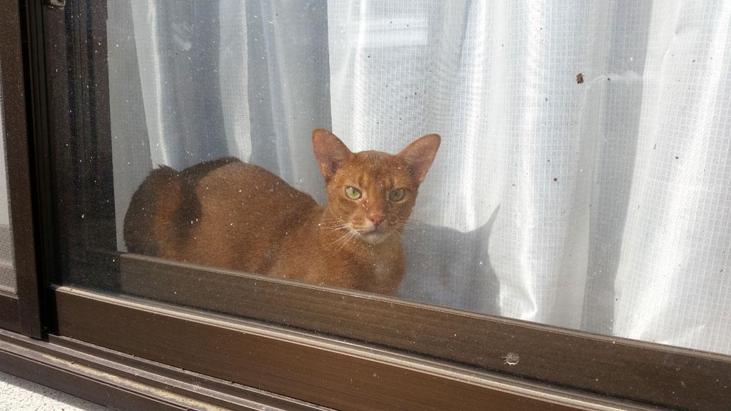 窓際で寛ぐアビのすけ君。