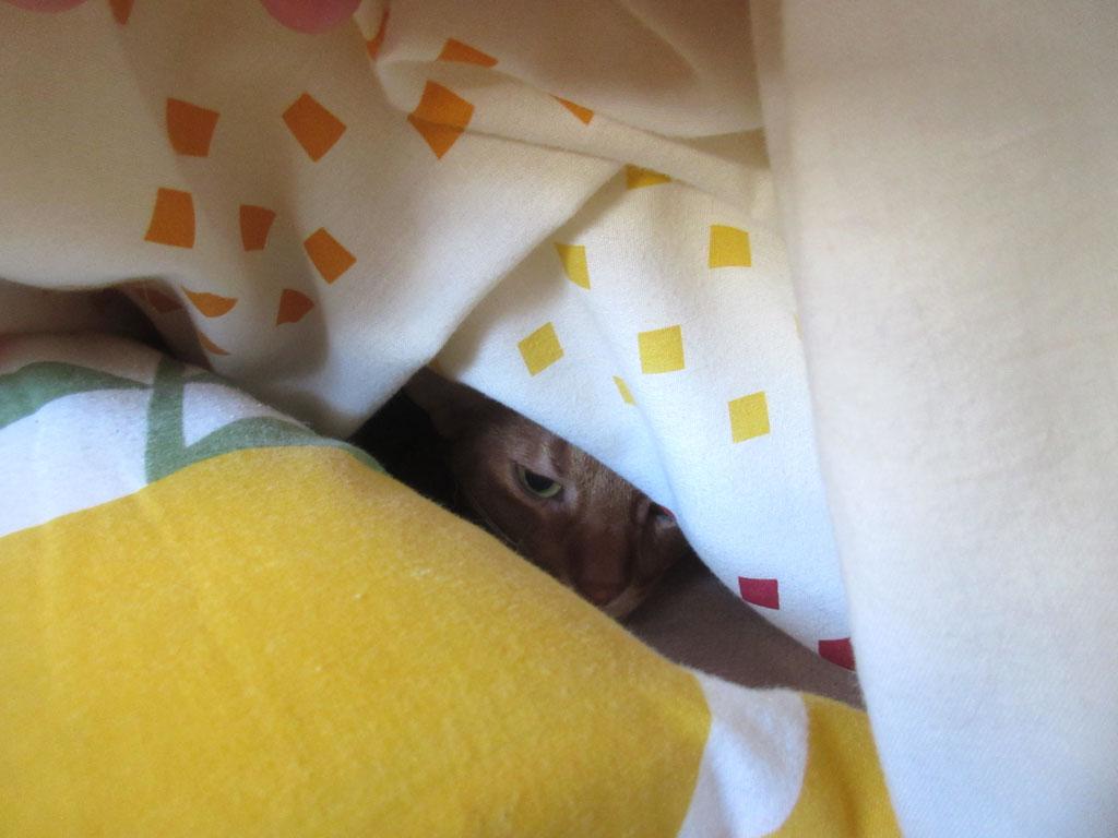 アビのすけが寝てた。(笑)